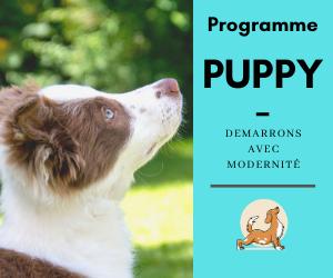 Programme PUPPY