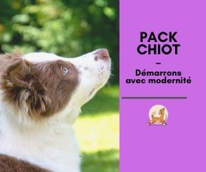 Pack CHIOT